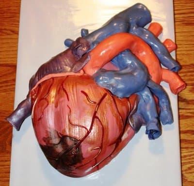 Anatomie Kuchen 01