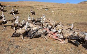 Würdevolles Begräbnis in Tibet