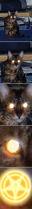 What really shines in cats eyes