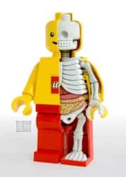 Lego Escultura Anatomia Minifig