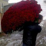 en liten haug med roser for favoritten