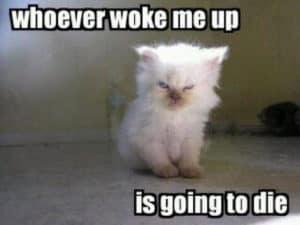 Qui que ce soit qui me réveilla ...