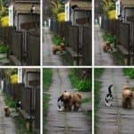 Amigos Animales