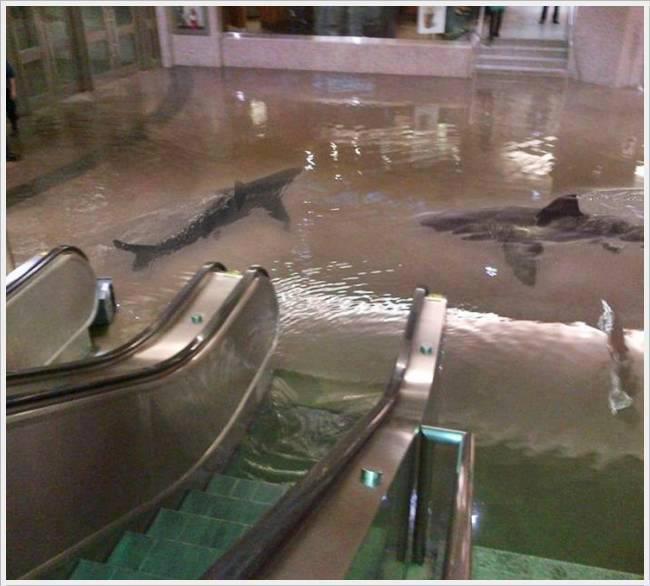 Neulich im Einkaufszentrum