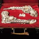 Knochen Duell Pistolen