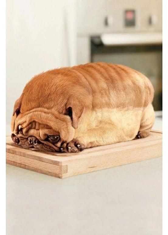 Brot Hund