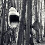 Geçenlerde ormanda yürüyüş ziyaret