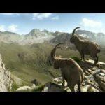 """Steenbok New Spot """"Klimmer"""" Gian en Giachen"""