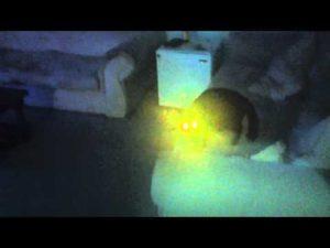 Fukushima Cat