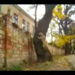 Traits – The parkour dog from Ukraine