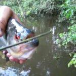 Piranha schaar – Piranha Schaar