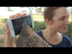 Peter the elephant plays with a Samsung Galaxy Note