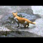 Cat der ikke giver en enkelt Rend