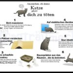 Sign, Om din katt planerar att döda dig