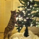 the christmas cat safe