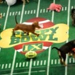 Puppy Bowl - Die WEBCAM en direct des Tages