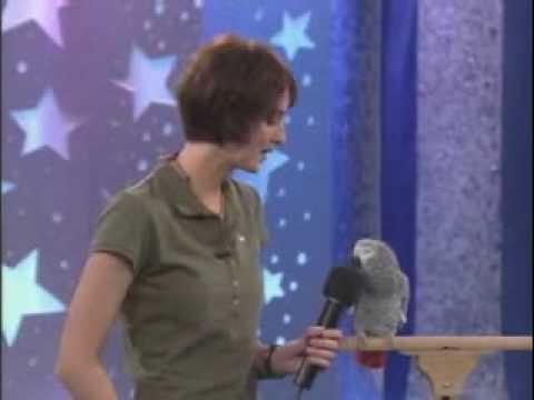 Dieser Papagei hat Talent
