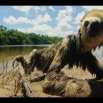 Sloth Wet