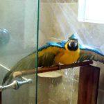 Ara nimmt ne Dusche