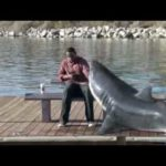 Hai am Arm festgebissen – Quit Smoking Shark
