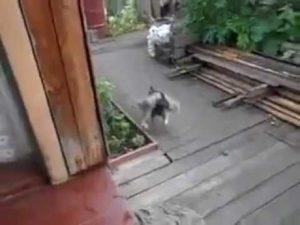 Hund bringt Katze heim