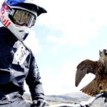 Peregrine against bike