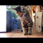 Katzen kotzen zu Techno