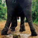 Schenk merda – Anonimo invio di cacca di elefante