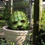 Pinhead Cactus