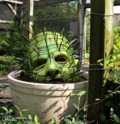 Pinhead Kaktus
