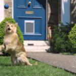 Soyez Plus Dog – Un chat décide d'être un chien