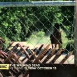 The Walking Dead Staffel 4 Peek Sneak
