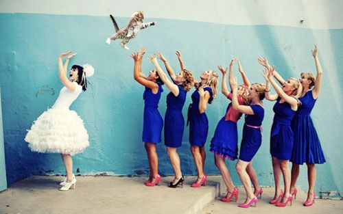 brides, throw the cats