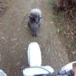 Biker vs.. Pässi