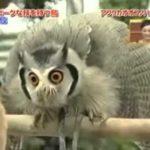 búho mal – Evil Owl