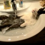 Lapin prend une douche – Voilà comment un lapin de bain fait