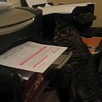 Cat vs. Printing Printer
