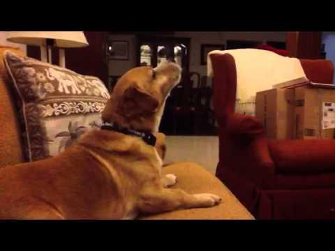 Dieser Hund ist Ein grosser Star trek Fan | Dravens Tales