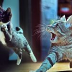 Gatitos En The Beat РPeque̱os gatos contra ladrones