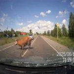 Liebe Mobiliar, plötzlich standen zwei vögelnde Kühe auf der Strasse..