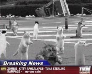 Zombie Kitty Apocalypse