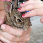 The reintroduction of a rabbit babies and a lesson in food chain