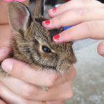La réintroduction d'un bébé de lapin et une leçon dans la chaîne alimentaire