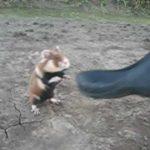 Evil Ninja Hamster