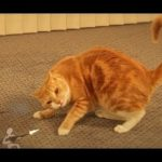 Ginger Cat vs The Paper leger