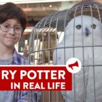 Real Life Harry Potter