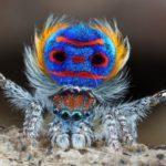 Vain spider