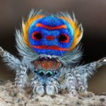 Vain spindel