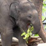 Erstes Lebensjahr des Elefantenbaby Lily in 2 Minuten