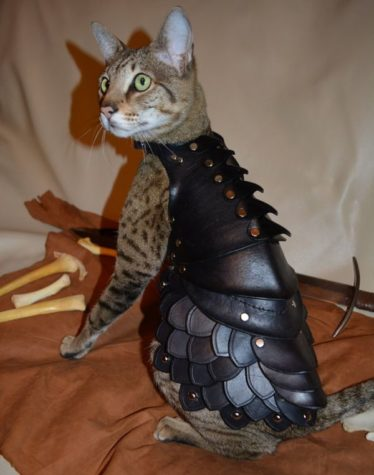 Leder Rüstung für die Katze
